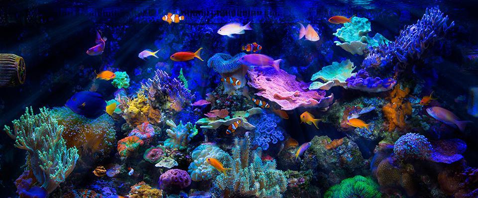 Kolorowe ryby natle wody