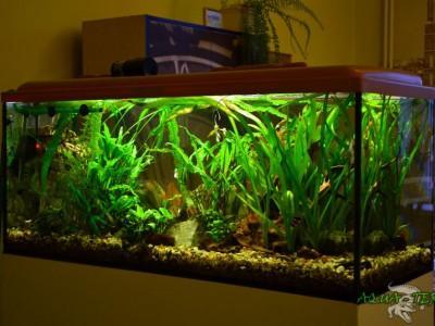 akwarium roślinne 03