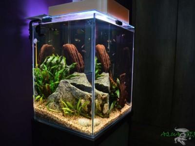 akwarium słodkowodne nanokawarium 05