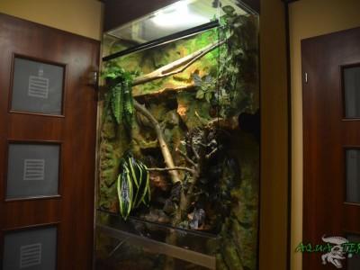 terrarium dla legwana zielonego 02