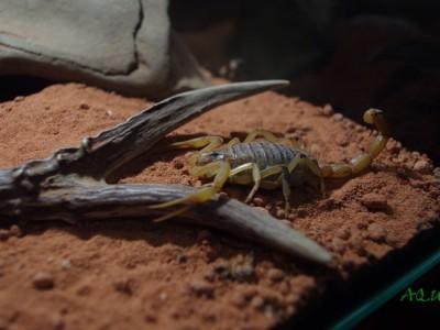 terrarium dla skorpiona 01